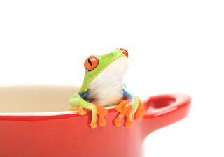 Síndrome de la rana hervida: saltamos ahora o correremos su suerte