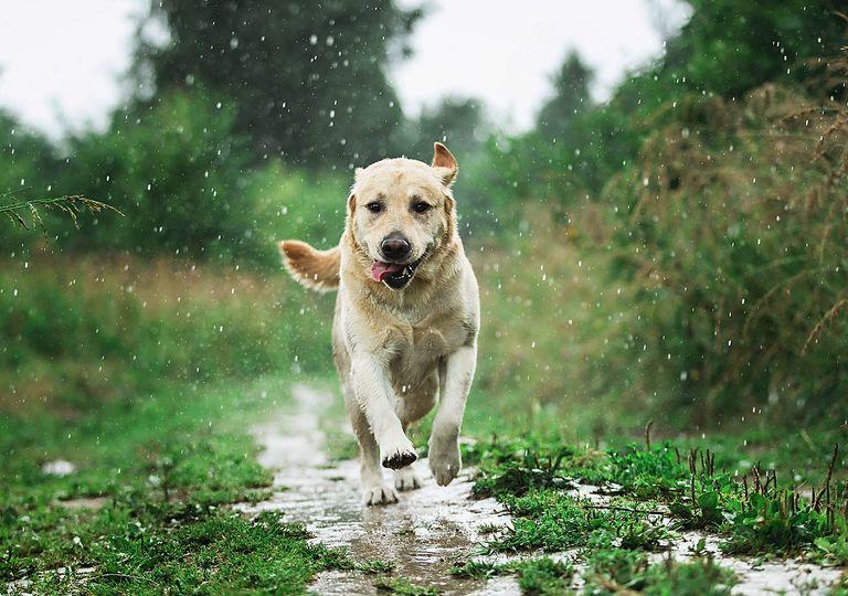perro corriendo bajo la lluvia