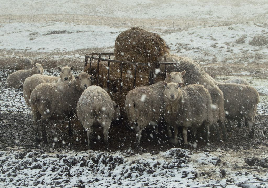 Snow is accompanied with strong winds in northern Scotland, particularly in Shetland.