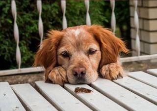 Sol y calor: imán de bichos en casa