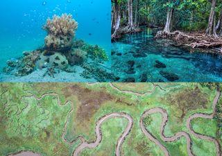 Soluciones basadas en la naturaleza para la protección de costas