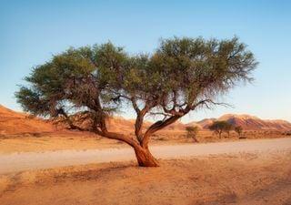 Découverte surprenante de millions d'arbres dans le désert du Sahara