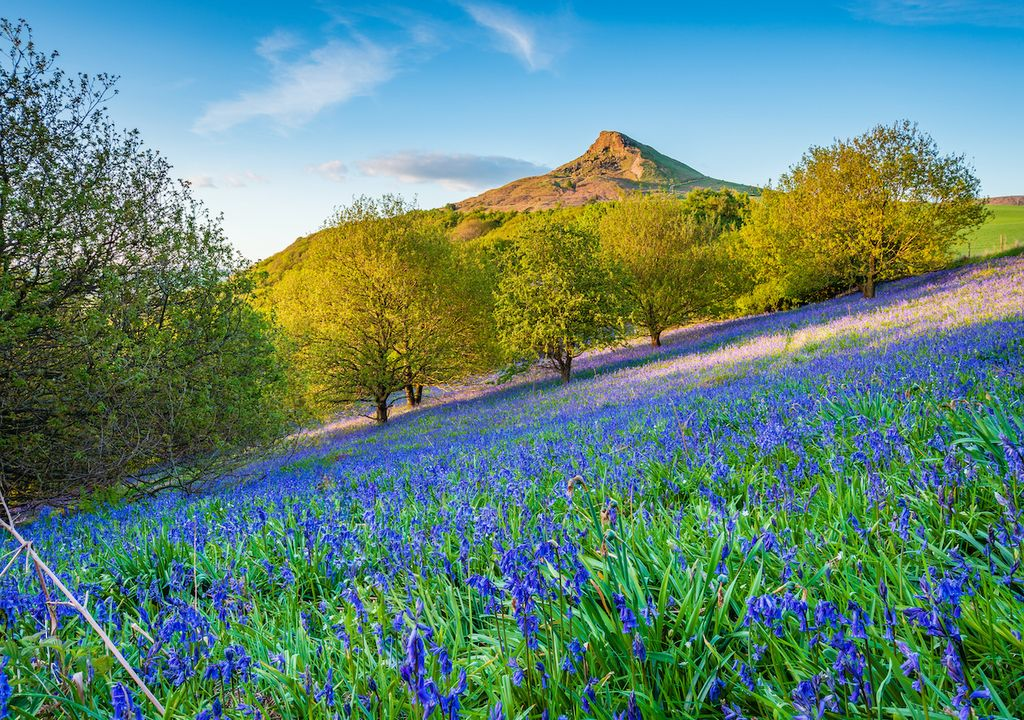 Spring is officially here according to the astronomical calendar, making way for sunshine and the blooming of bluebells.