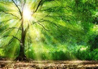 """Des """"super-arbres"""" contre l'effet de serre"""