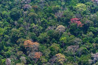 Temperatura crítica en los bosques tropicales