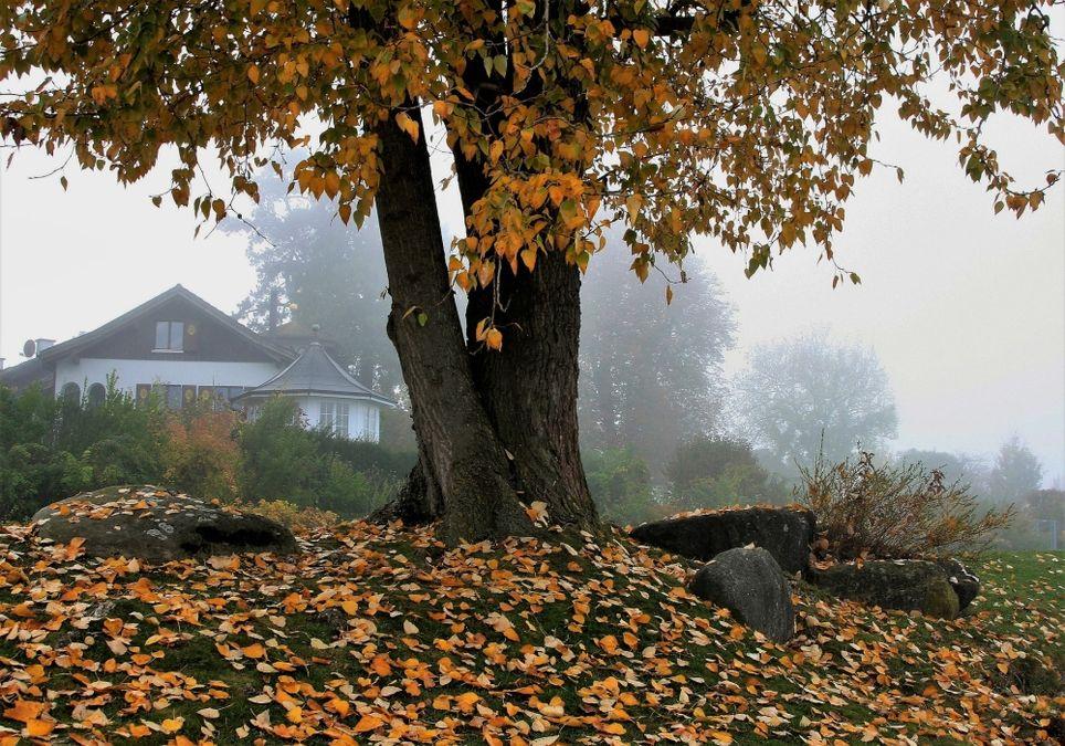 Herbst bringt Regen