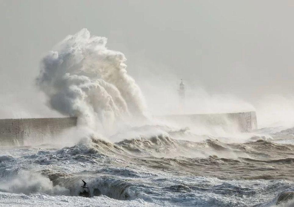 tempesta dennis - photo #4