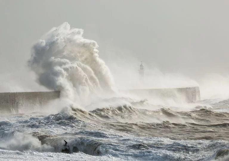 tempesta-dennis