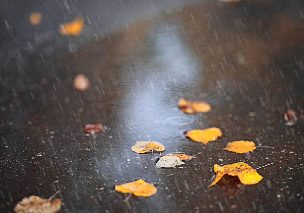 chuva; outono;