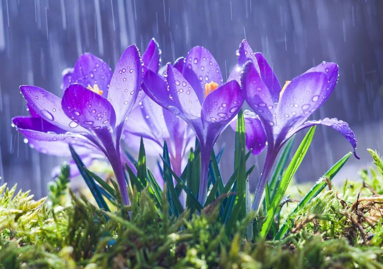 Flores na primavera à chuva