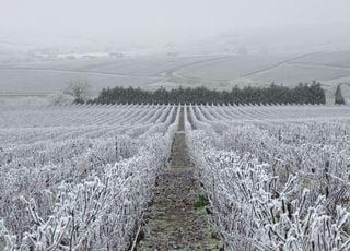 Tendance météo : invasion d'air froid, neige et gelées inquiétantes !