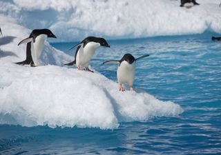 The future of the Antarctic: greener and with different wildlife