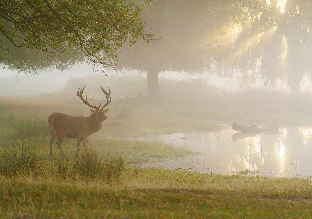 Foggy landscape.