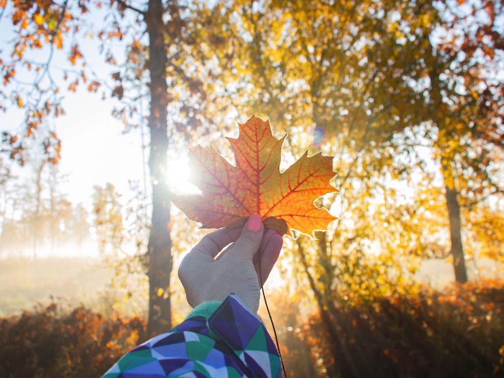 Autumn outdoors.
