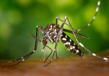 ¿Por qué nos pican los mosquitos?