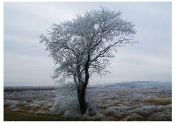 ¡Regresa el frío! Fin de semana con descenso térmico y lluvias