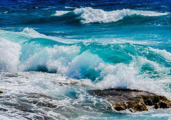 150 mil euros para proteger espécies marinhas ameaçadas