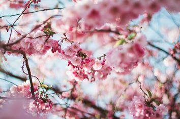 Algunos refranes de la primavera