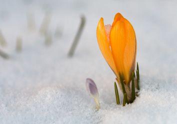 Bis 15 Grad warm: Frühling am 4. Advent?