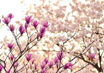 Das Wochenwetter: Vielfach trocken und meist vorfrühlingshaft warm!