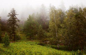 Diferencia entre neblina y niebla