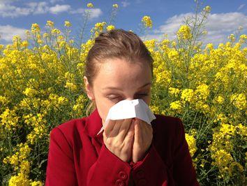 Explosion des pollens de bouleaux !
