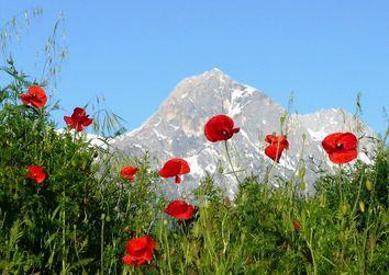 I parchi nazionali italiani: ecco quali sono