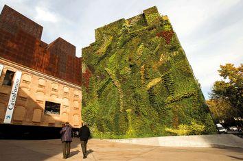 Jardines verticales, una solución de adaptación al cambio climático