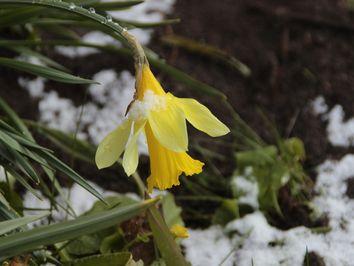 Kälteschock am Montag: Polarluft bringt Schneeflocken!