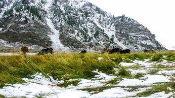 Krasser Temperatursturz bringt Alpenschnee!
