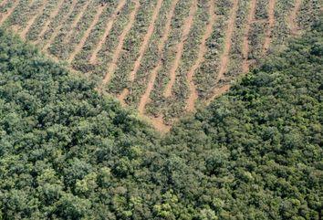 La deforestación está descontrolada