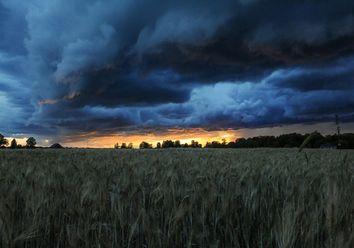 La lluvia y el trigo