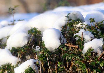 Nach dem Schnee bis 14 Grad am 4. Advent?