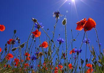 Oggi un assaggio d'estate: caldo e temperature in aumento