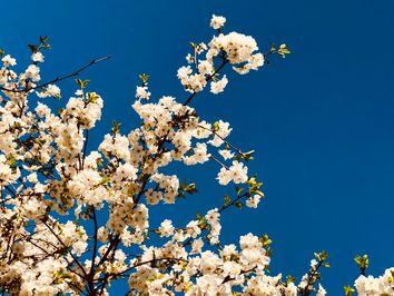 Tempo esta semana: sol e calor autênticos de primavera