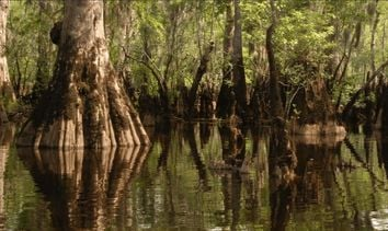 Un árbol de más de 2600 años se ha descubierto en EE.UU.