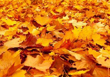 Y ahora, ¿qué hacemos con las hojas?