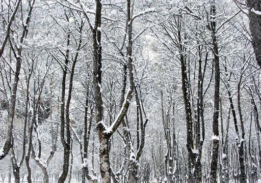 Si el tiempo ya te parece invernal, ¡prepárate para los próximos días!