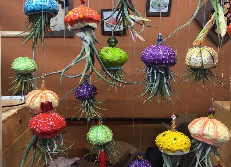 Las tillandsias, las medusas del aire o, también llamadas, las plantas para vagos, son ideales para los entornos más húmedos.