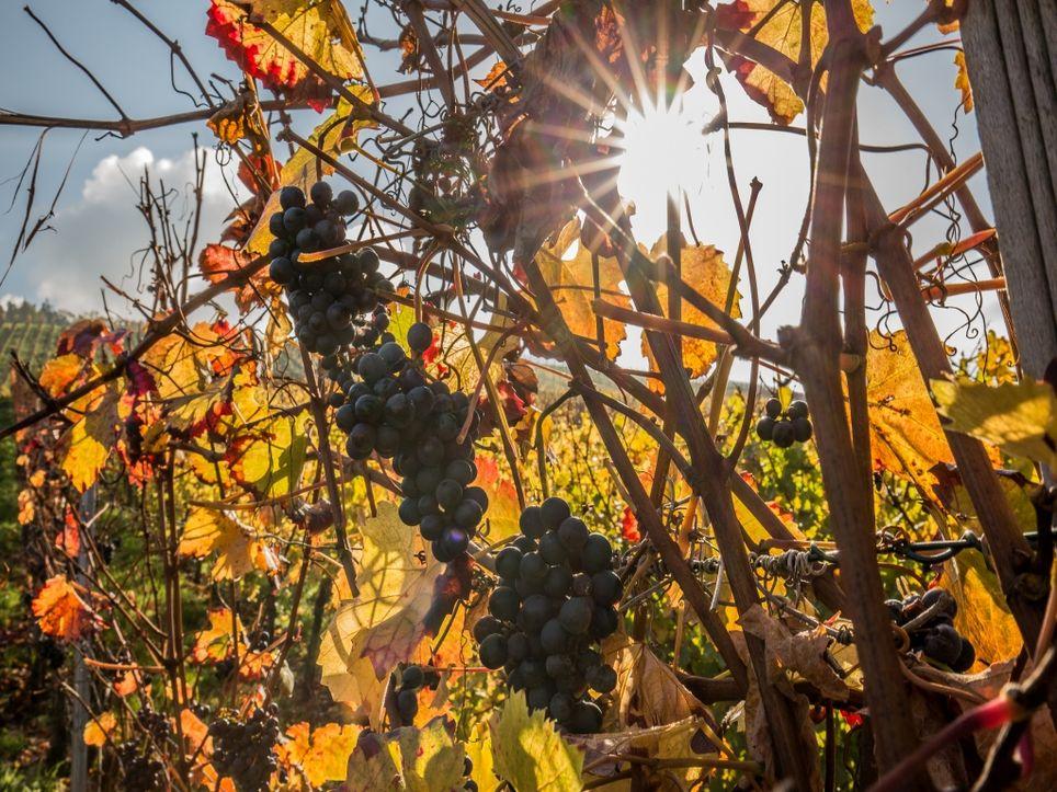 Goldenes Herbstwochenende