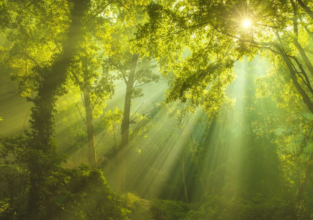 More trees are needed in the fight against climate change