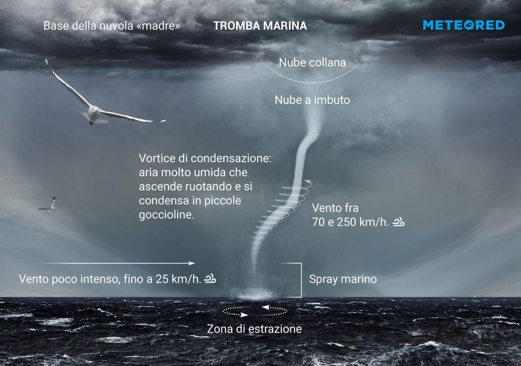 tromba-marina
