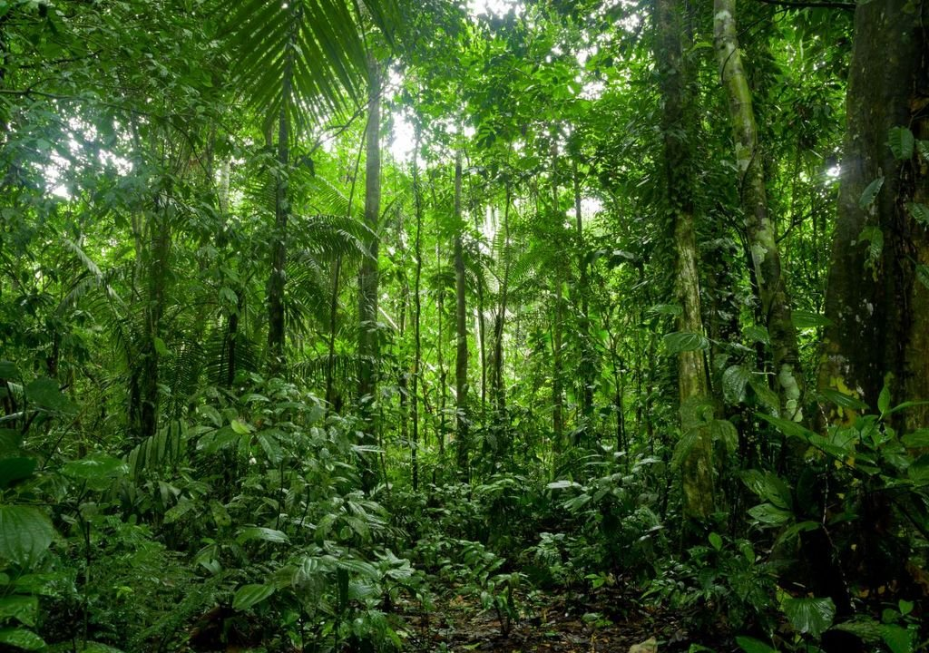Tropical forests can absorb massive amounts of carbon dioxide