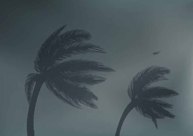 Palm trees in strong winds from Haishen in South Korea and Japan.