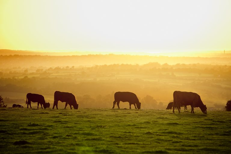 UK farming has huge potential to reduce carbon emissions