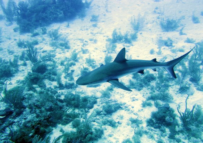 The new network of underwater cameras will capture information about wildlife under threat such as sharks.