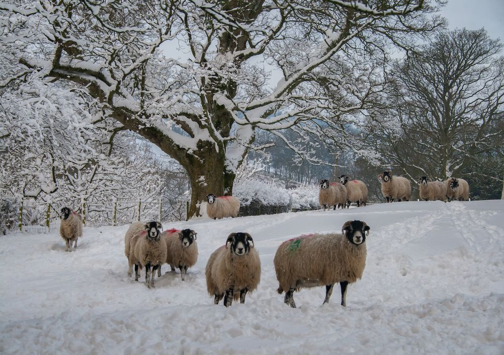 Snow has been a sight for many in rural, upland parts of the country this weekend.