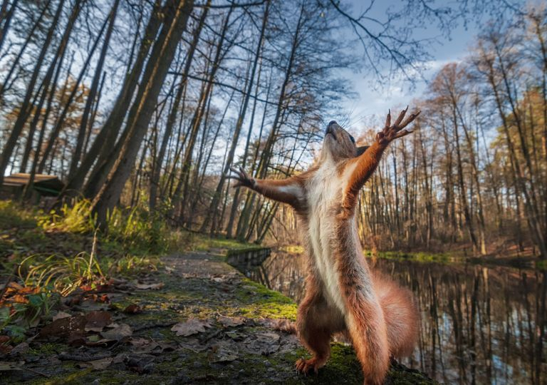 Esquilo na floresta.
