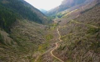 Un anno fa Vaia: l'insostenibile peso degli alberi caduti