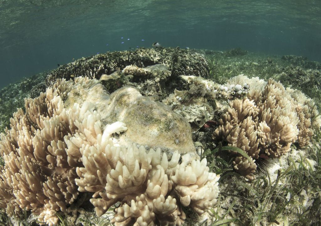 Coral bleaching is occurring more frequently as oceans warm.